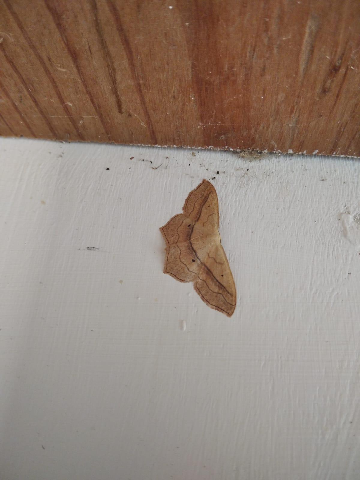 Daily Moth Exam