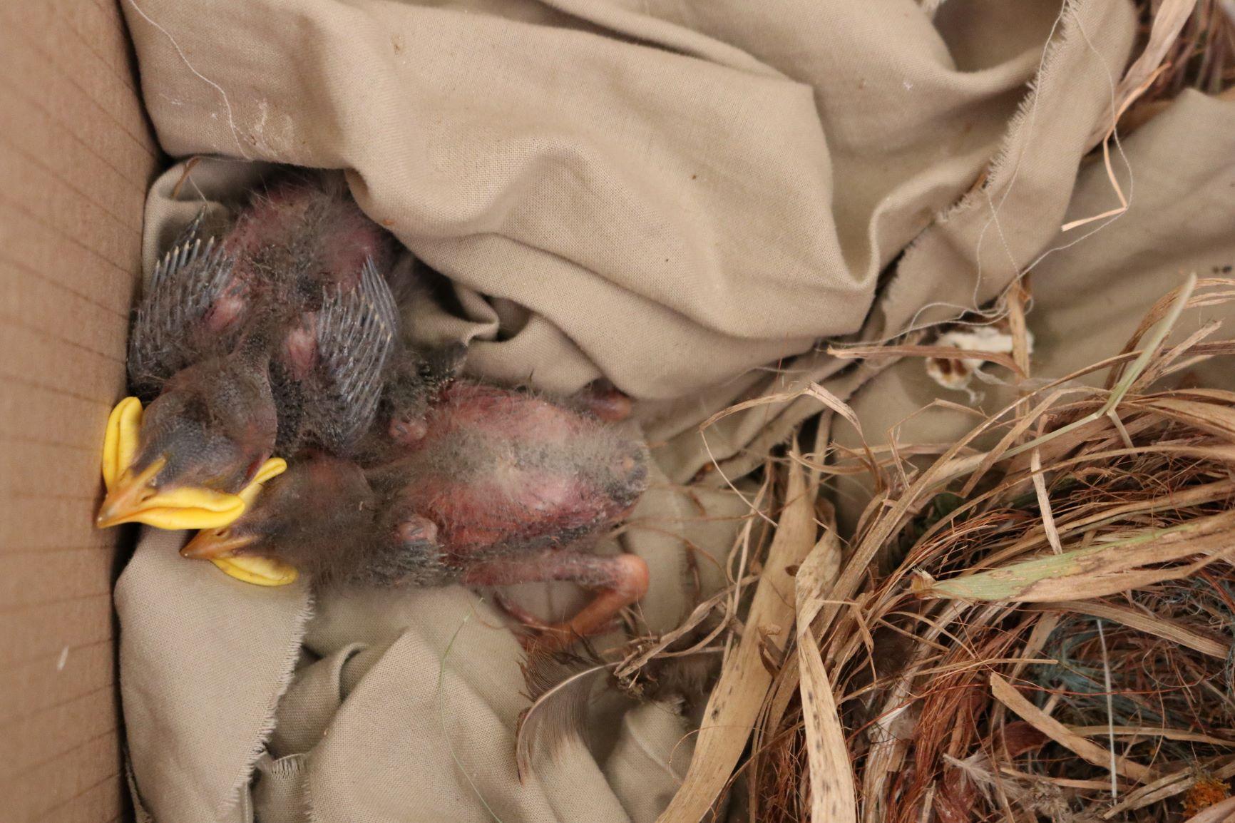 Blackbird Rubbish
